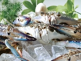 Whole round swimming crab